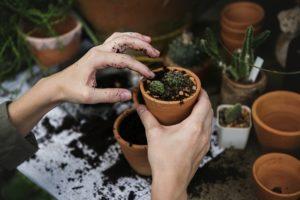 メルカリ 植物 発送 送り方 梱包 トラブル 第四種
